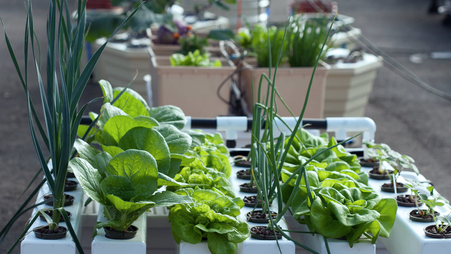 How to make a hydroponics system