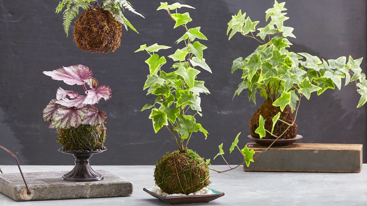 How to make a kokedama