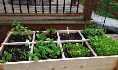 Easy gardening at home