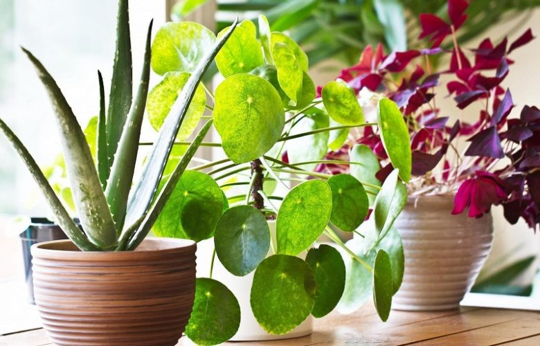 tips for plant care