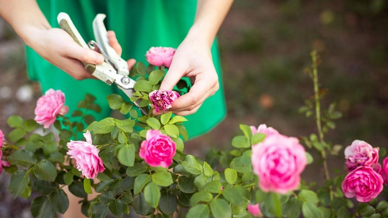 The 6 rules for having a lush garden
