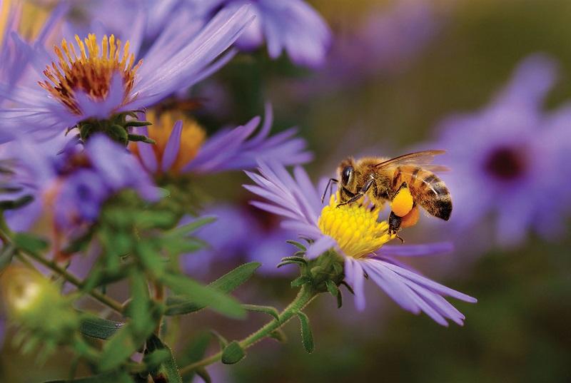 Create a garden for bees