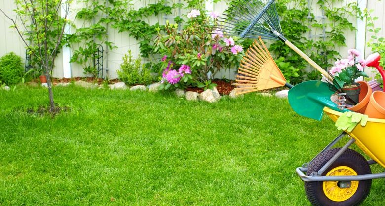How to better maintain your lawn